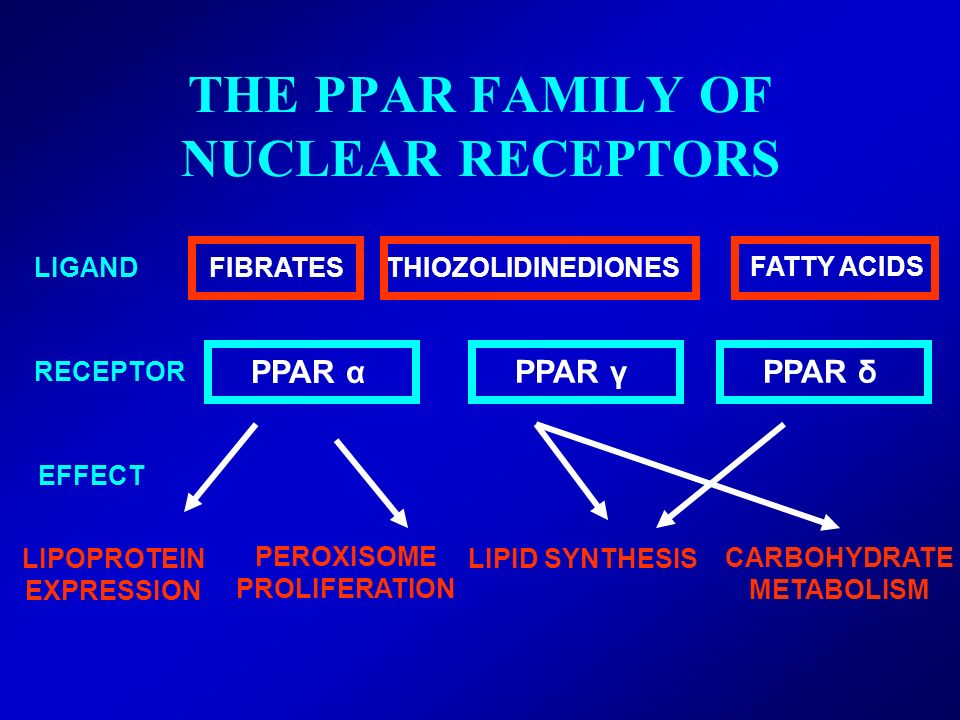 THE PPAR FAMILY OF NUCLEAR RECEPTORS