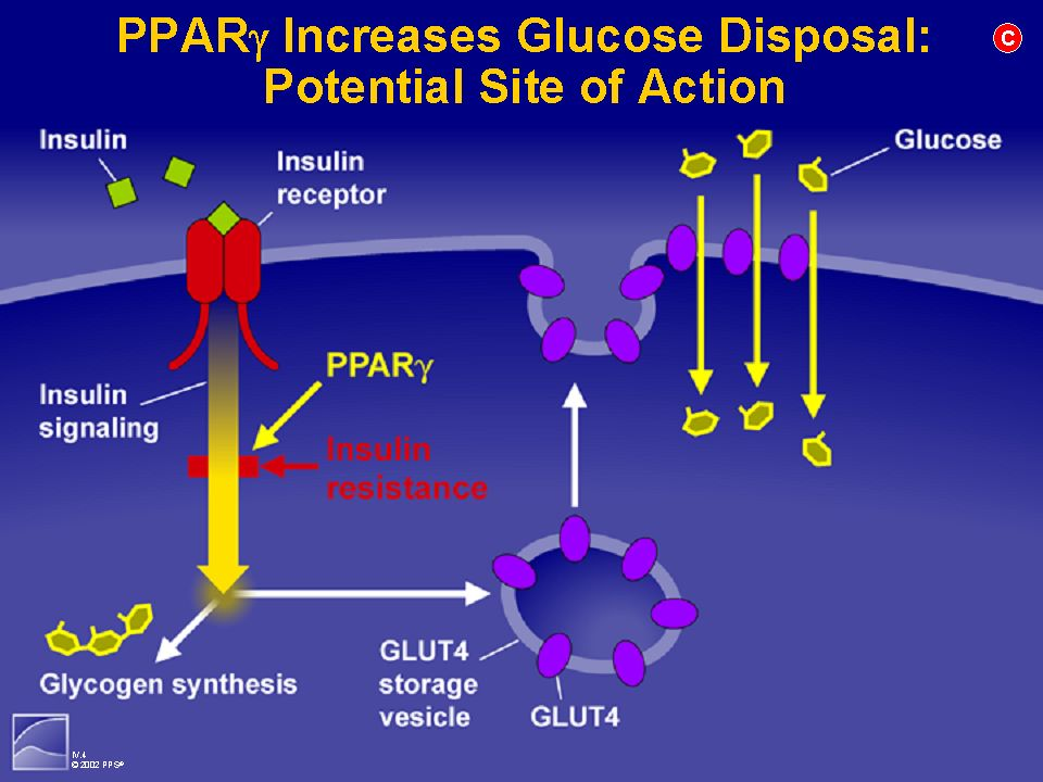 PPARg Increases Glucose Disposal: Potential Site of Action