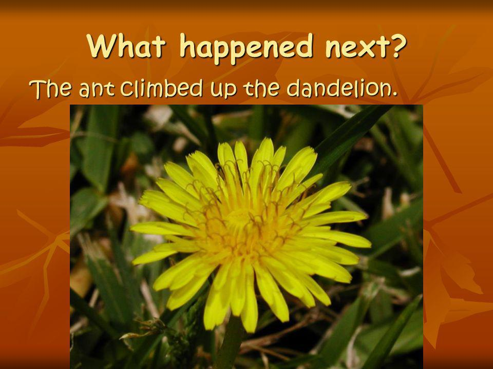 What happened next The ant climbed up the dandelion.