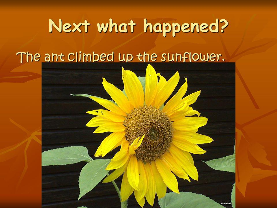 Next what happened The ant climbed up the sunflower.