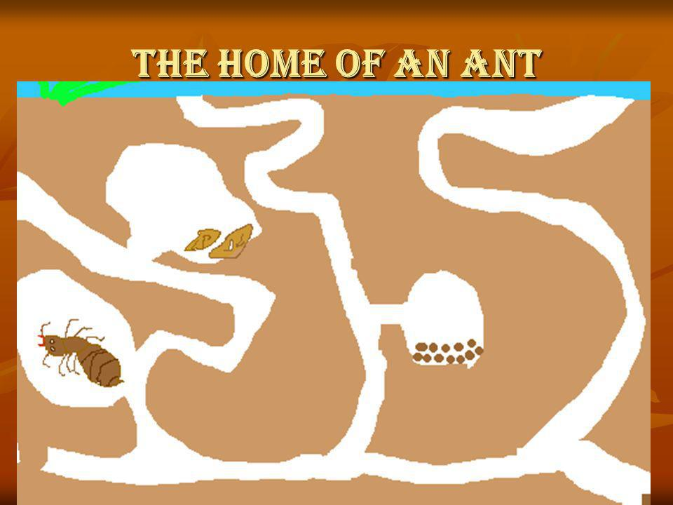 The Home of an Ant