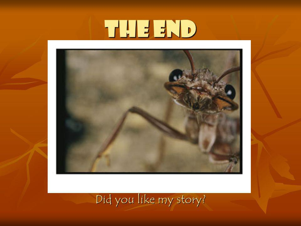 THE END Did you like my story
