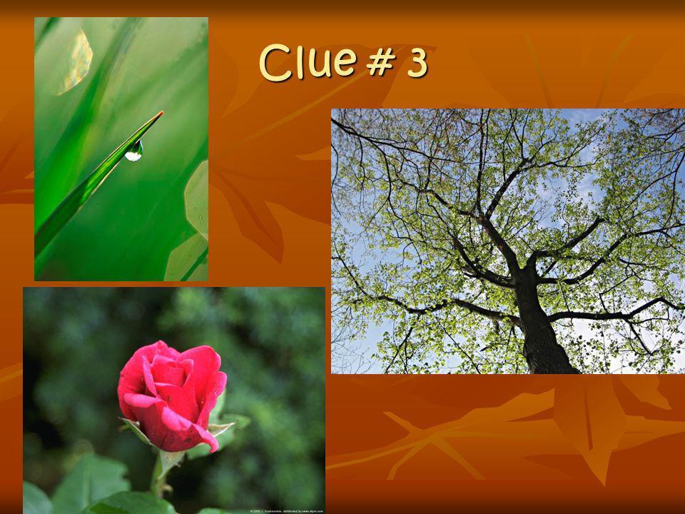 Clue # 3