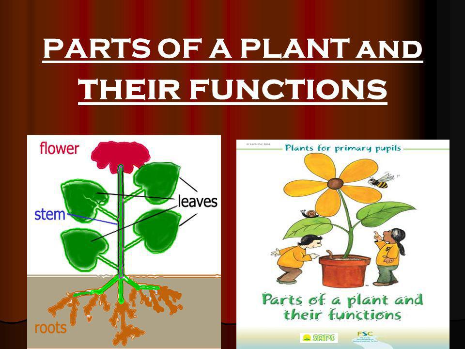 PARTS OF A PLANT and their functions