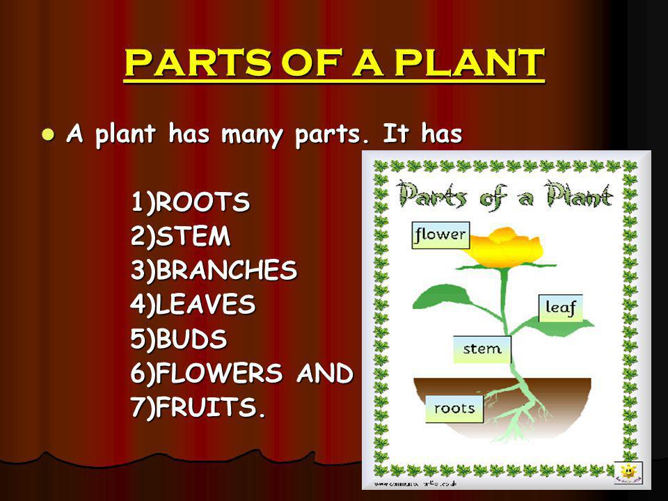 PARTS OF A PLANT A plant has many parts. It has 1)ROOTS 2)STEM
