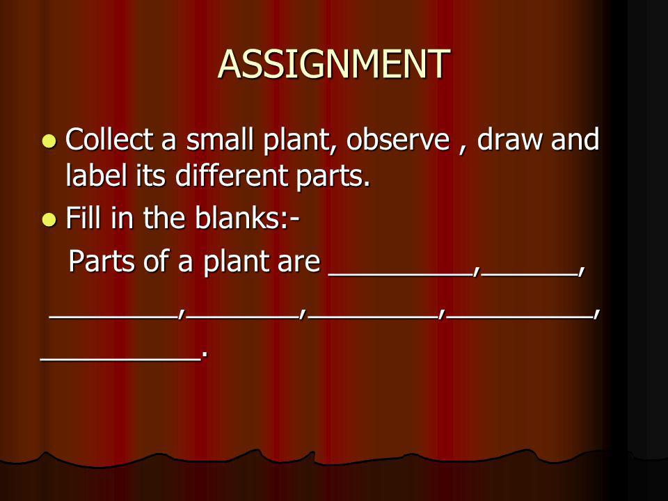 ASSIGNMENT Collect a small plant, observe , draw and label its different parts. Fill in the blanks:-