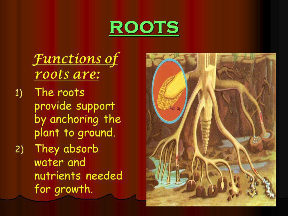 ROOTS Functions of roots are: