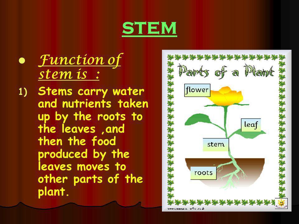 STEM Function of stem is :