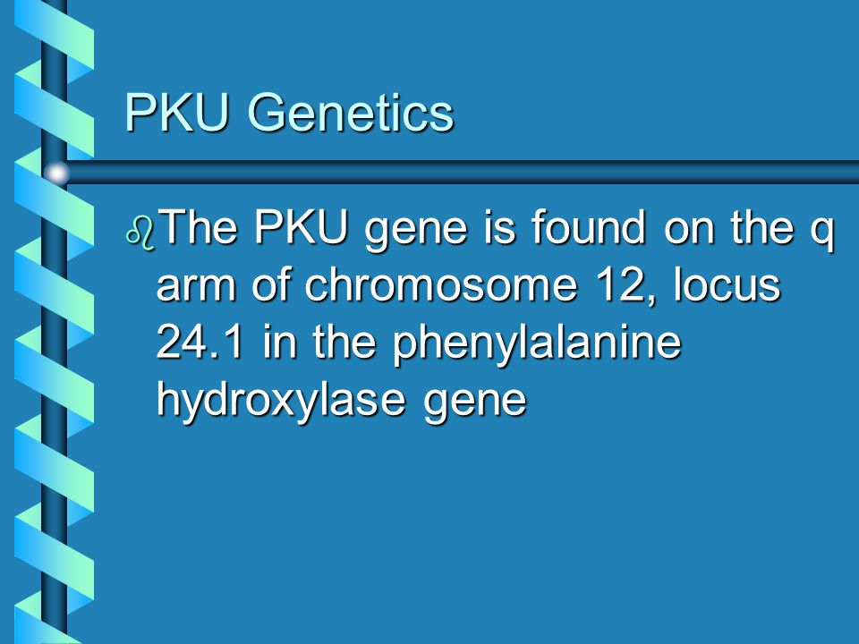 PKU Genetics The PKU gene is found on the q arm of chromosome 12, locus 24.1 in the phenylalanine hydroxylase gene.