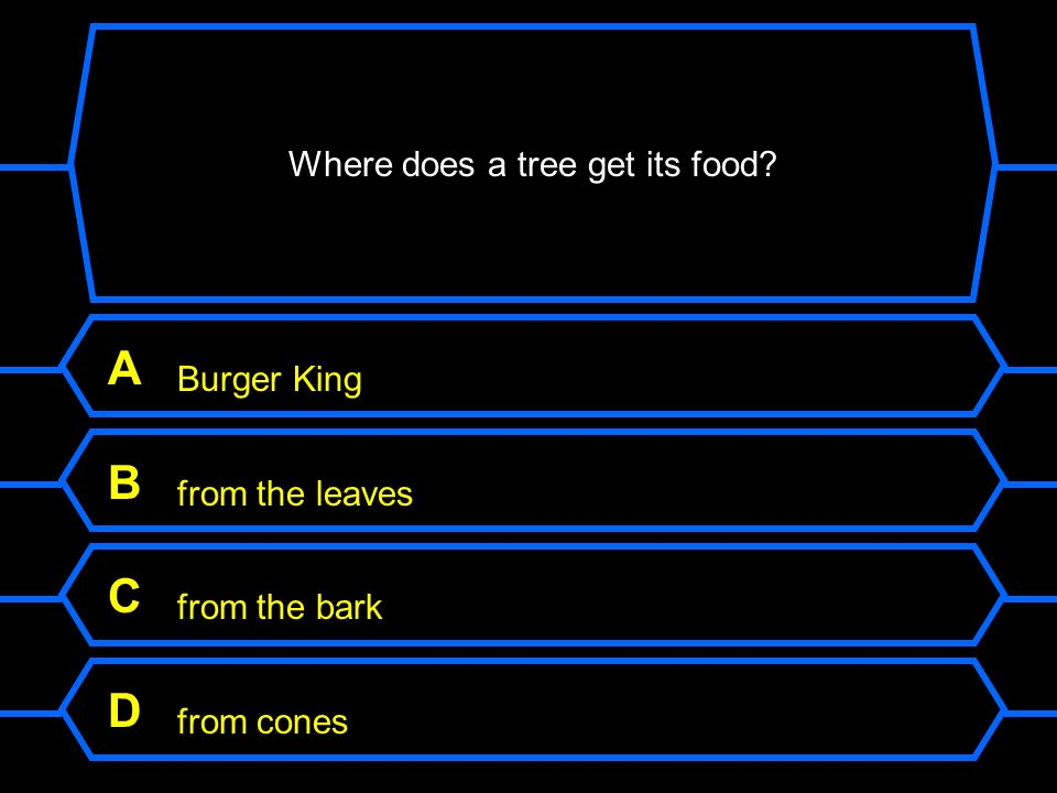 Where does a tree get its food