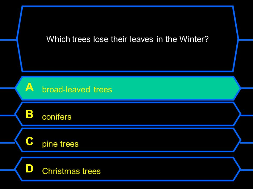 Which trees lose their leaves in the Winter