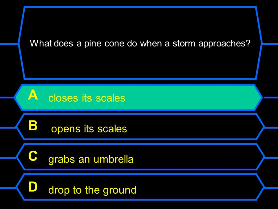What does a pine cone do when a storm approaches