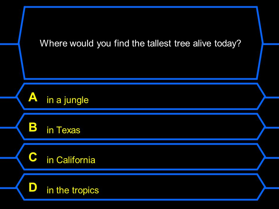 Where would you find the tallest tree alive today