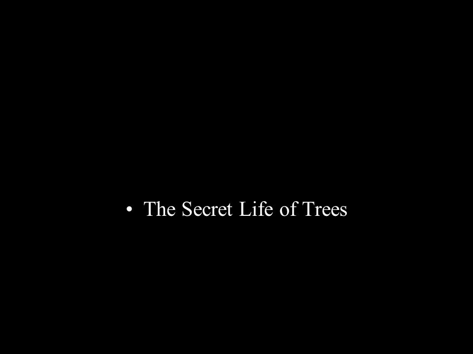 The Secret Life of Trees