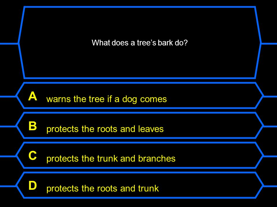 What does a tree's bark do