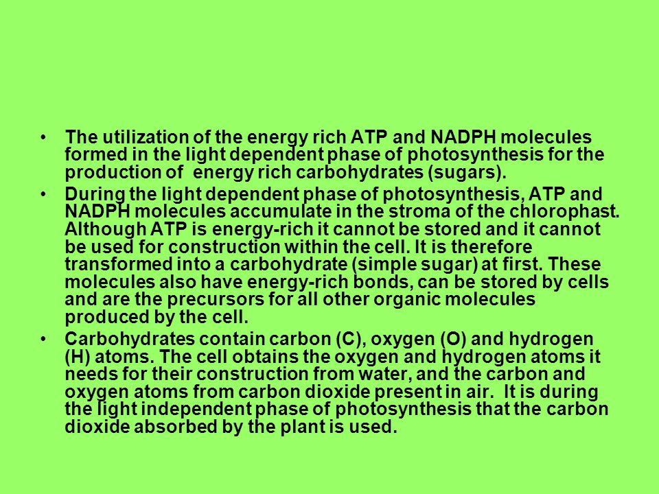 The utilization of the energy rich ATP and NADPH molecules formed in the light dependent phase of photosynthesis for the production of energy rich carbohydrates (sugars).