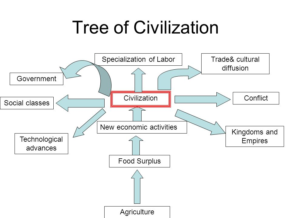 Tree of Civilization Specialization of Labor Trade& cultural diffusion
