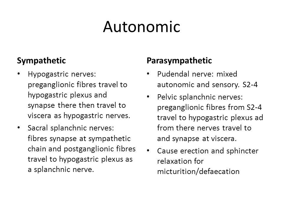 Autonomic Sympathetic Parasympathetic