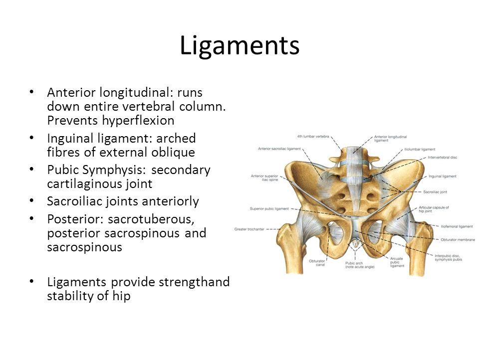 Ligaments Anterior longitudinal: runs down entire vertebral column. Prevents hyperflexion. Inguinal ligament: arched fibres of external oblique.
