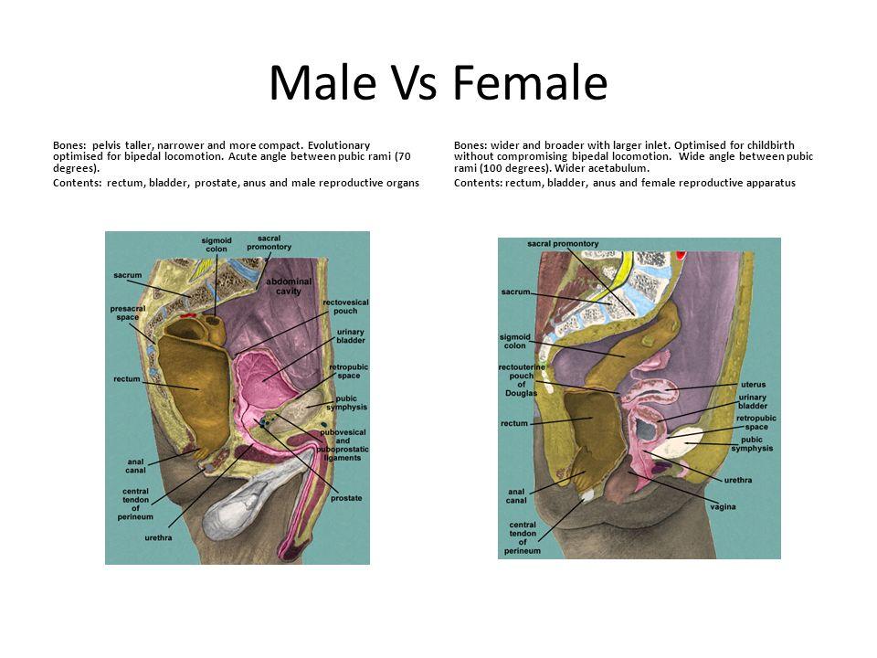 Male Vs Female