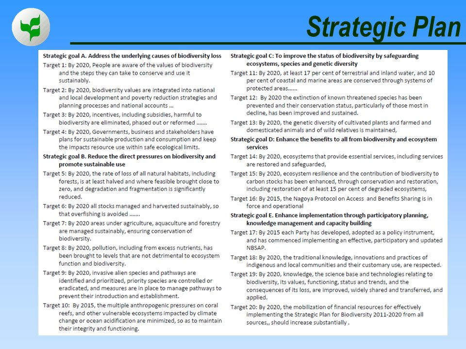 Strategic Plan 6