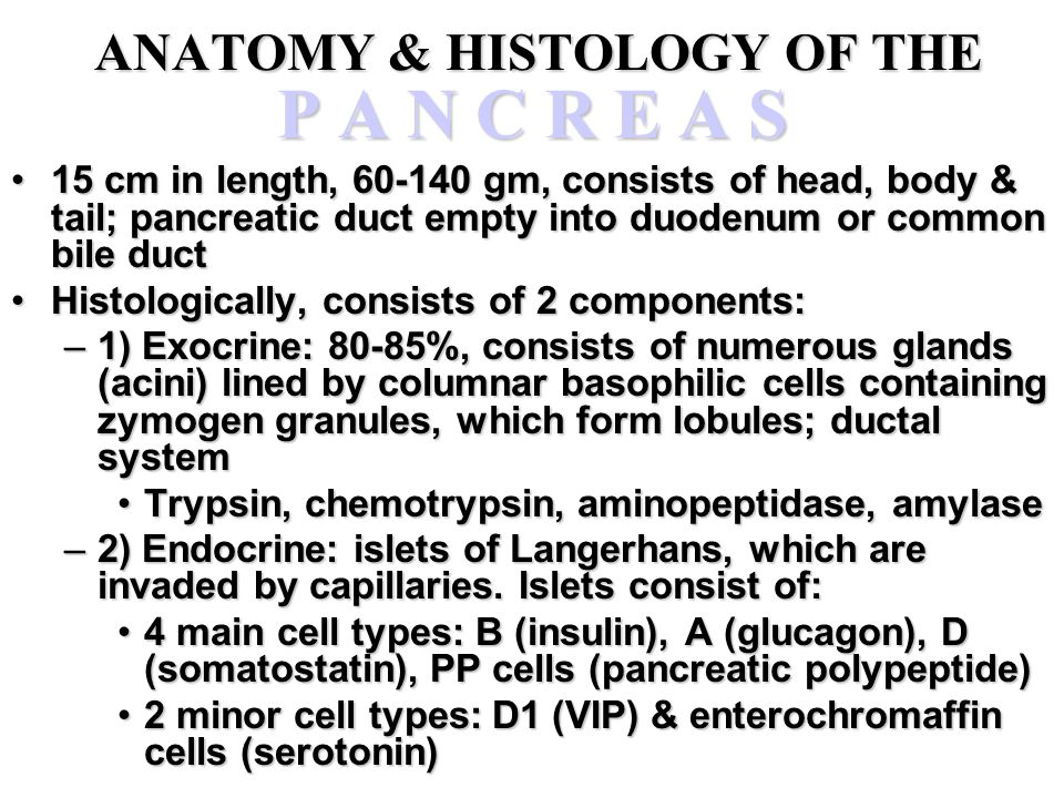 ANATOMY & HISTOLOGY OF THE P A N C R E A S