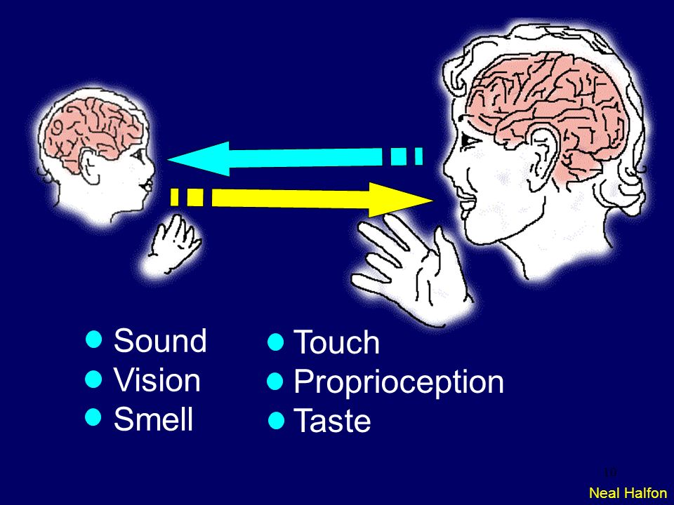 Sound Vision Smell Touch Proprioception Taste Neal Halfon