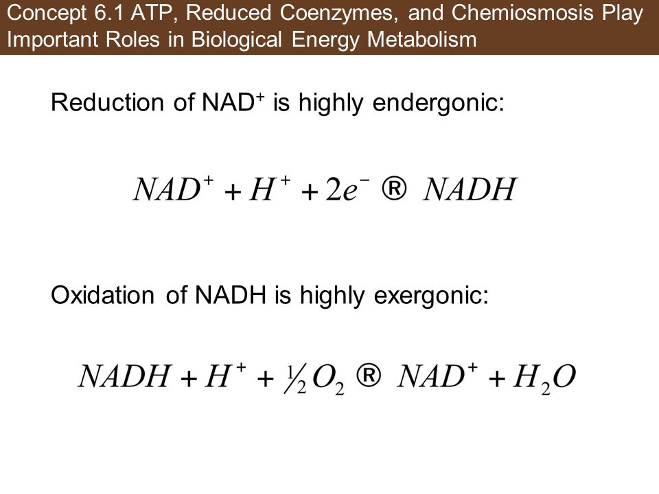 Reduction of NAD+ is highly endergonic: