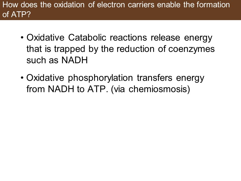 How does the oxidation of electron carriers enable the formation of ATP