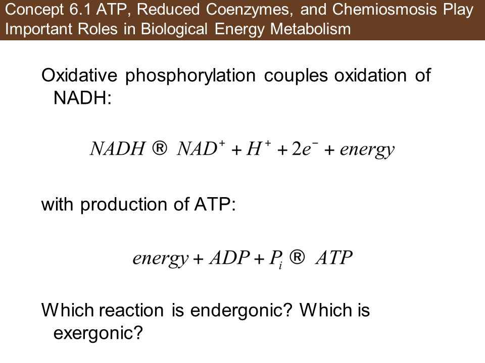 Oxidative phosphorylation couples oxidation of NADH: