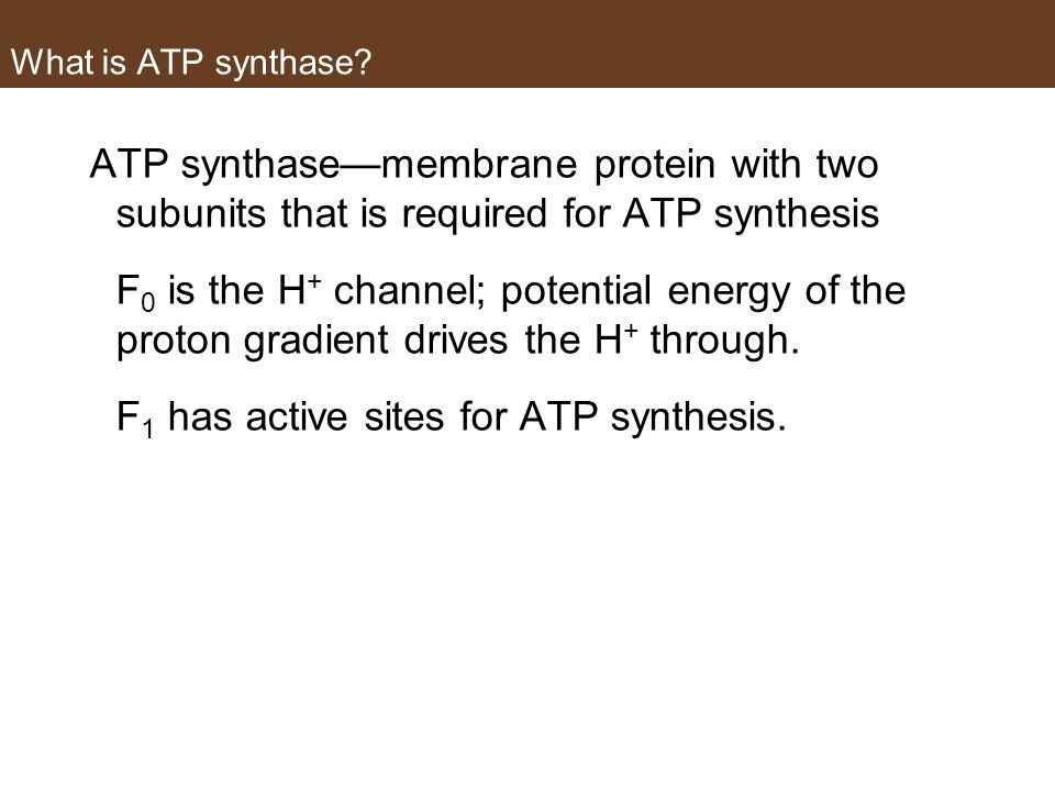 F1 has active sites for ATP synthesis.