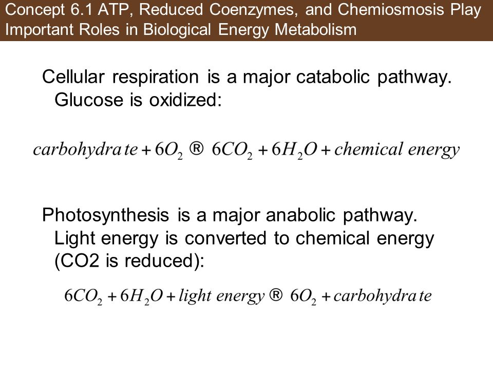 Concept 6.1 ATP, Reduced Coenzymes, and Chemiosmosis Play Important Roles in Biological Energy Metabolism