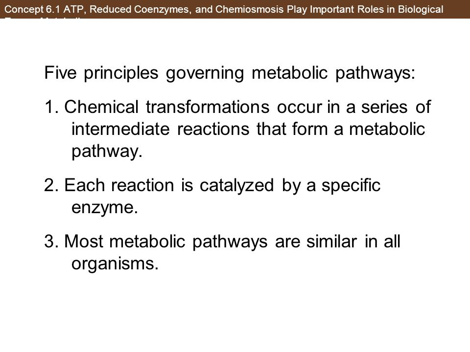 Five principles governing metabolic pathways: