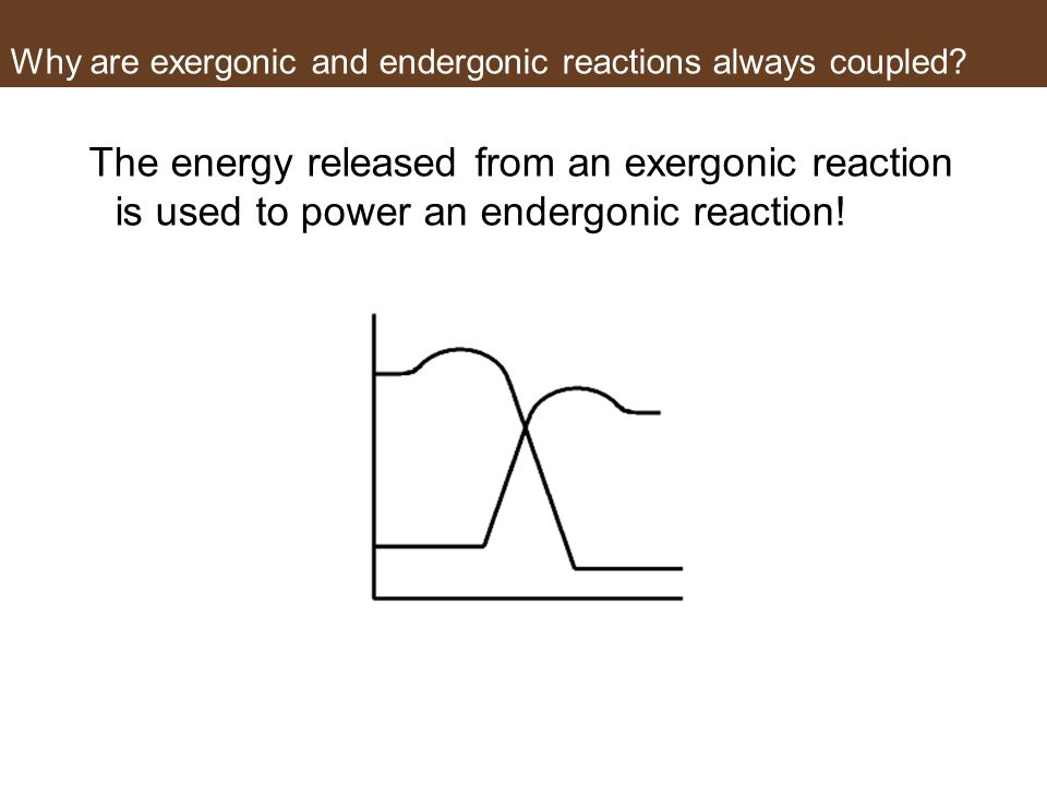 Why are exergonic and endergonic reactions always coupled