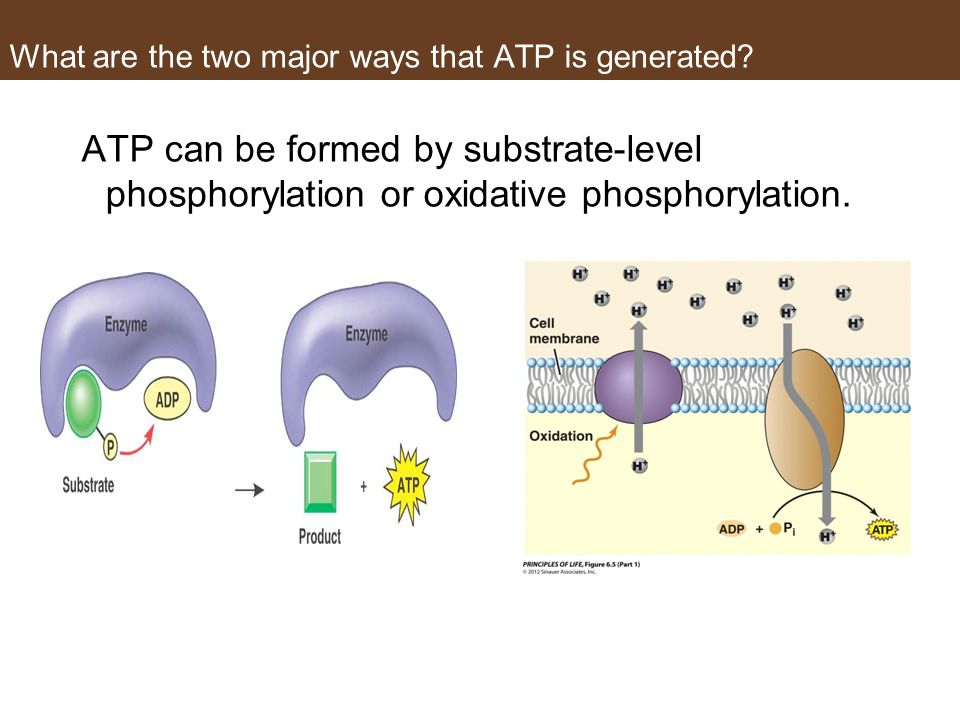 What are the two major ways that ATP is generated