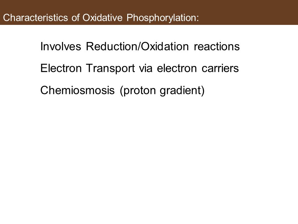 Characteristics of Oxidative Phosphorylation: