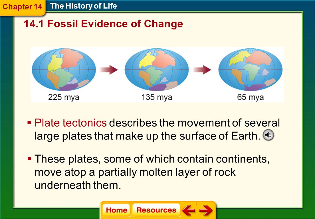Chapter 14 The History of Life Fossil Evidence of Change.