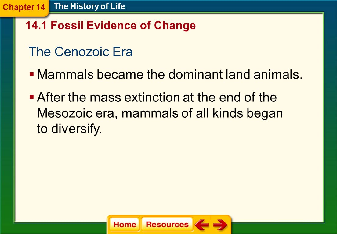 Mammals became the dominant land animals.