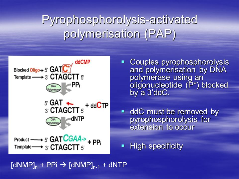 Pyrophosphorolysis-activated polymerisation (PAP)