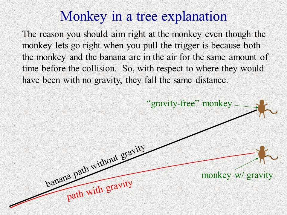 Monkey in a tree explanation