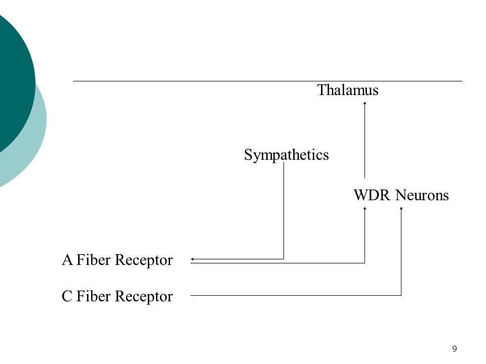 Thalamus Sympathetics WDR Neurons A Fiber Receptor C Fiber Receptor