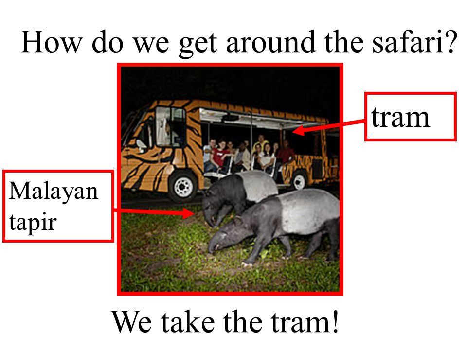 How do we get around the safari