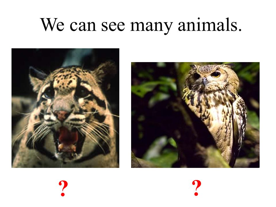 We can see many animals. leopard owl