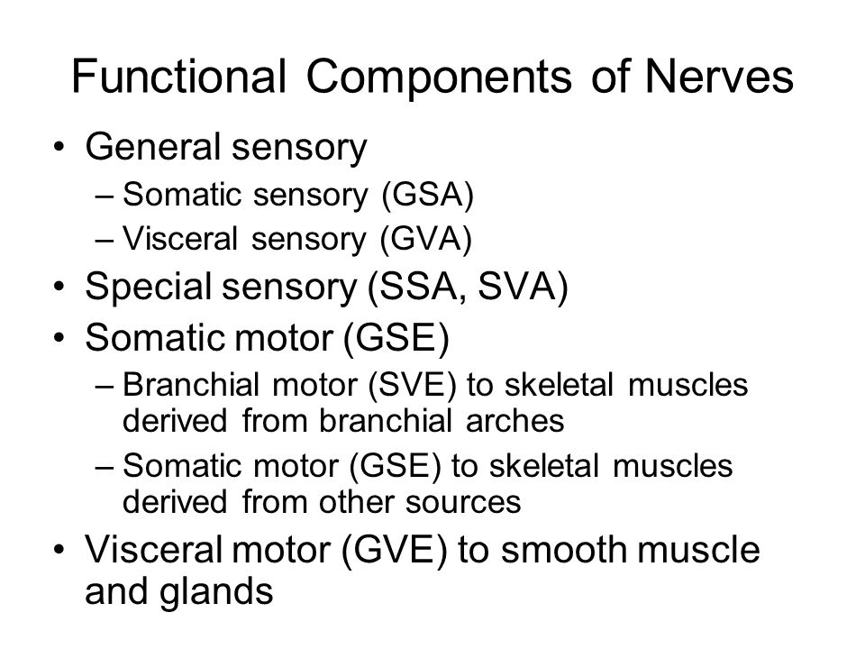 Functional Components of Nerves