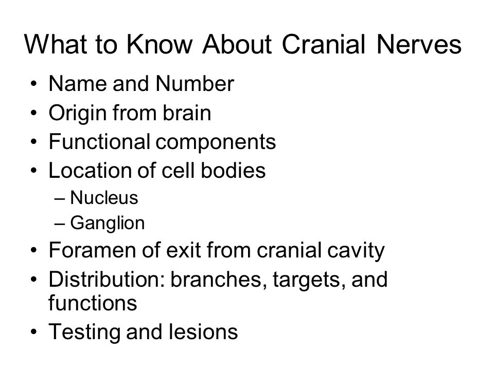 What to Know About Cranial Nerves