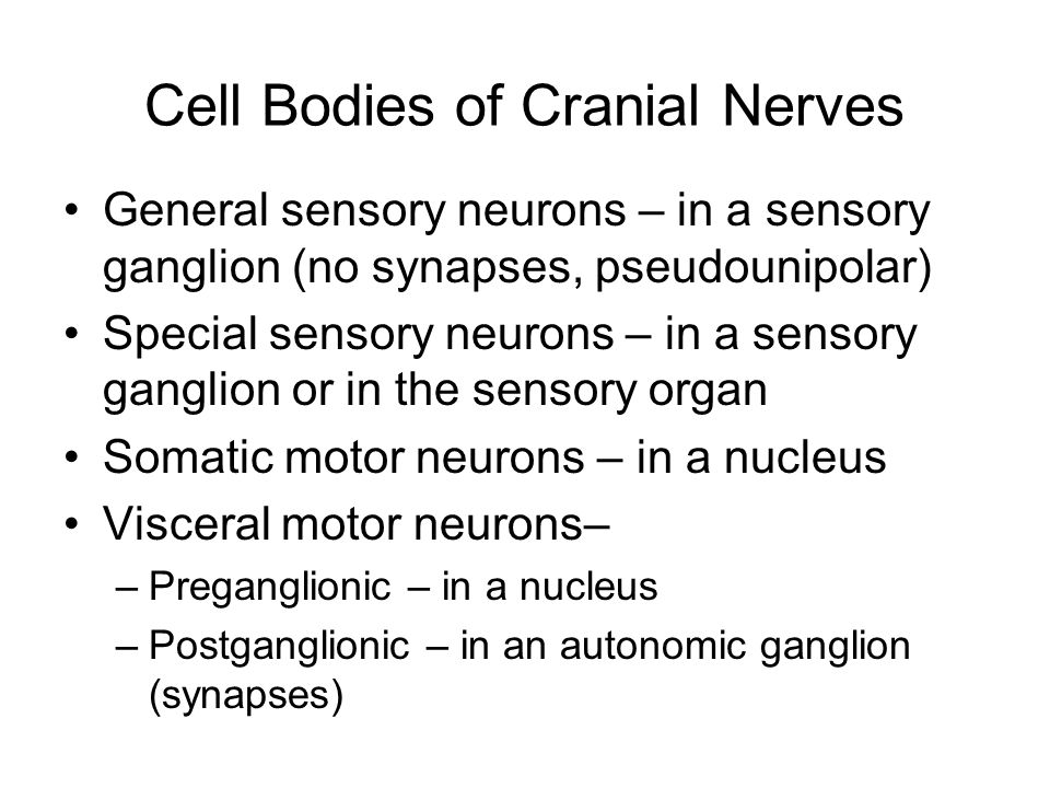 Cell Bodies of Cranial Nerves