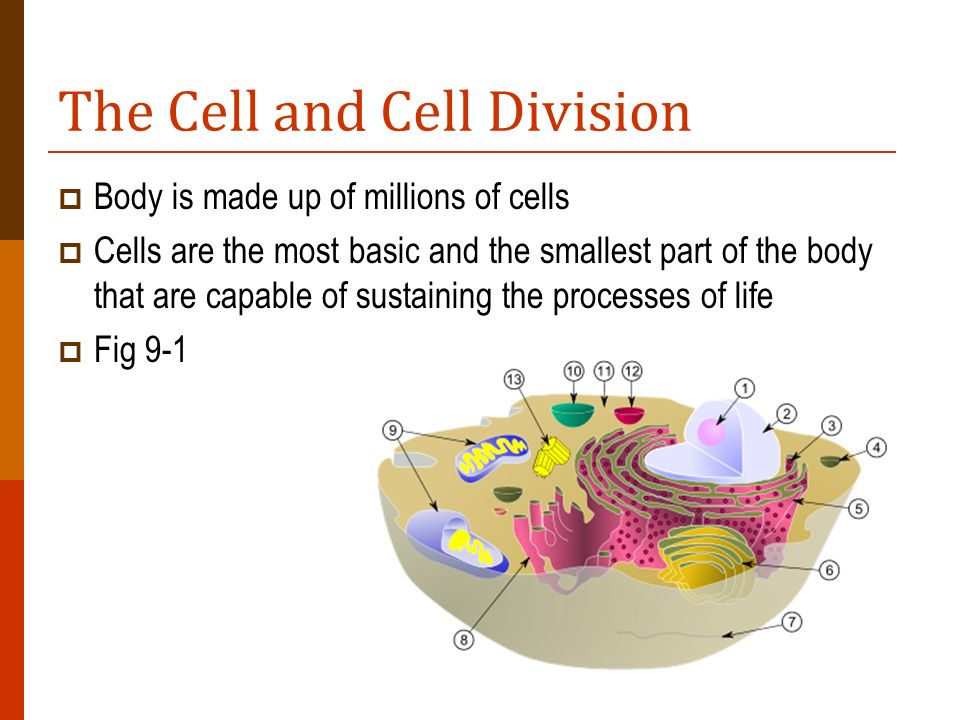 The Cell and Cell Division