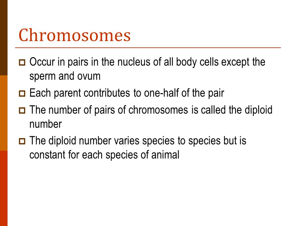 Chromosomes Occur in pairs in the nucleus of all body cells except the sperm and ovum. Each parent contributes to one-half of the pair.