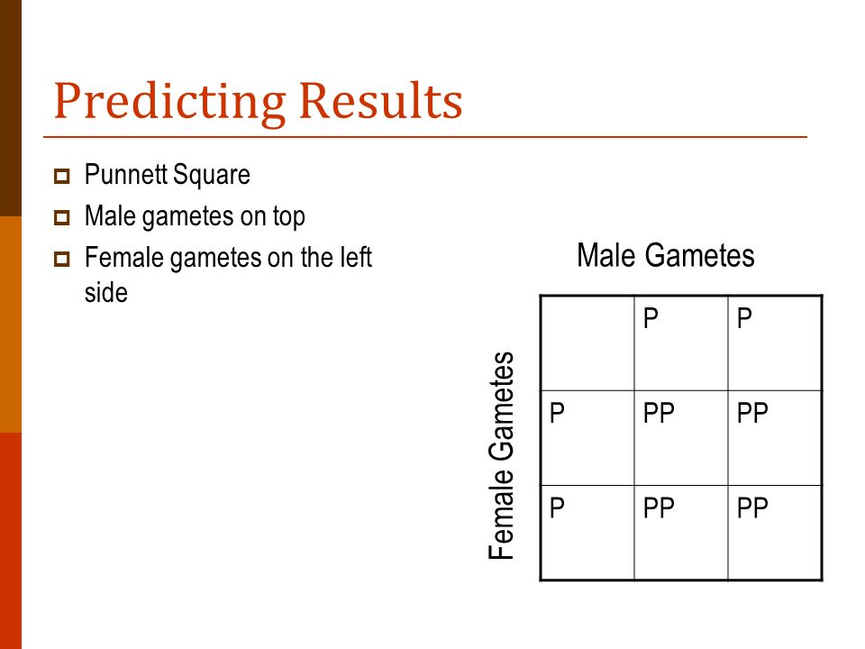 Predicting Results Male Gametes Female Gametes P Punnett Square