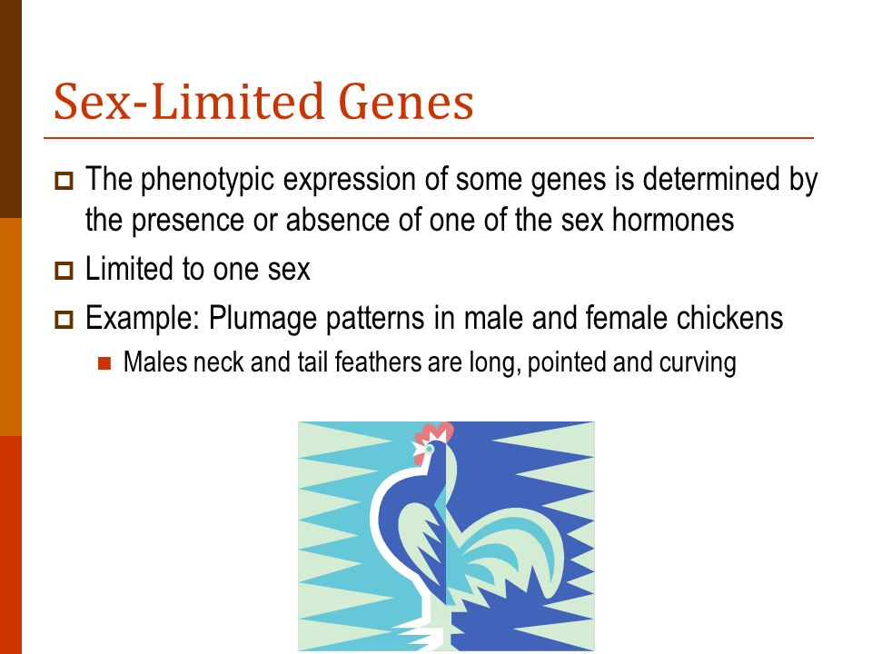 Sex-Limited Genes The phenotypic expression of some genes is determined by the presence or absence of one of the sex hormones.